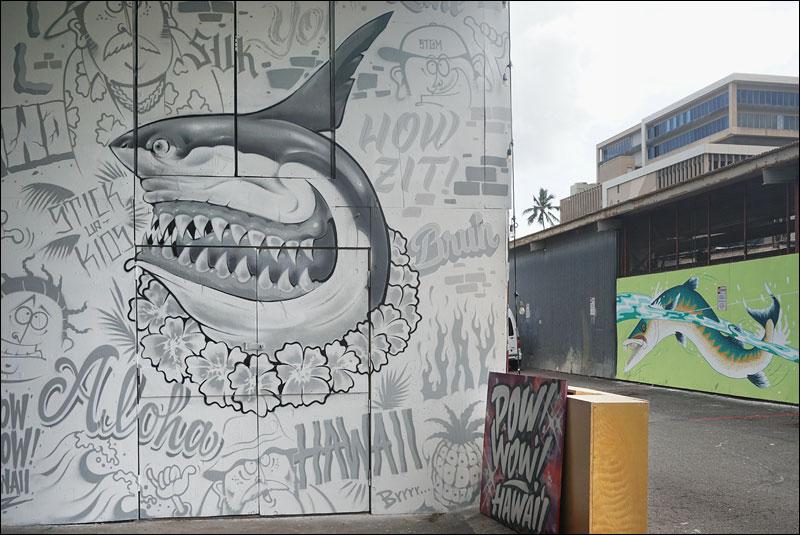 sharks and barracudas