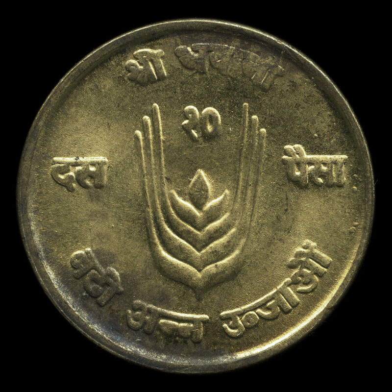 an obsolete Nepalese 10 paisa coin featuring a cow on one side and an ear of wheat on the other